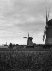 2. Panevėžio vėjo malūnai, 1930 m. B. Buračo nuotrauka iš kvr.kpd.lt