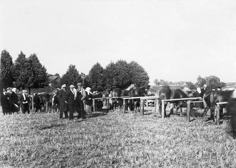 1. Žemės ūkio paroda. Nuotrauka iš Panevėžio kraštotyros muziejaus rinkinių